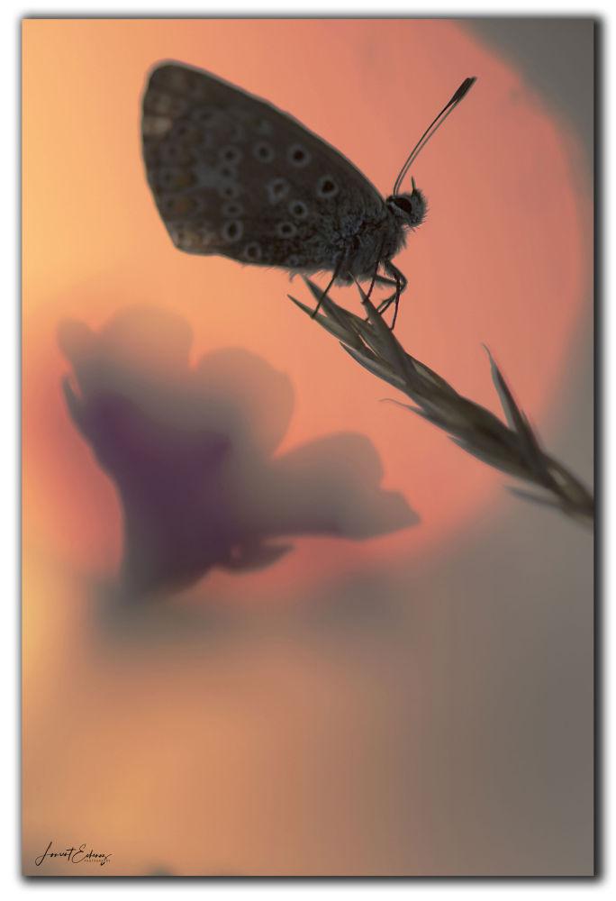 Papillon d'un autre monde