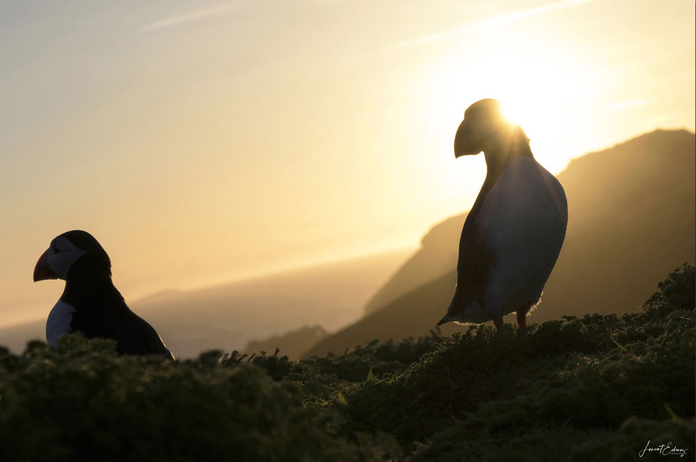 Puffin's paradise